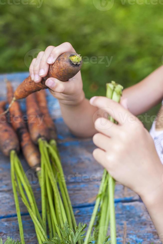 cenouras frescas nas mãos das crianças foto