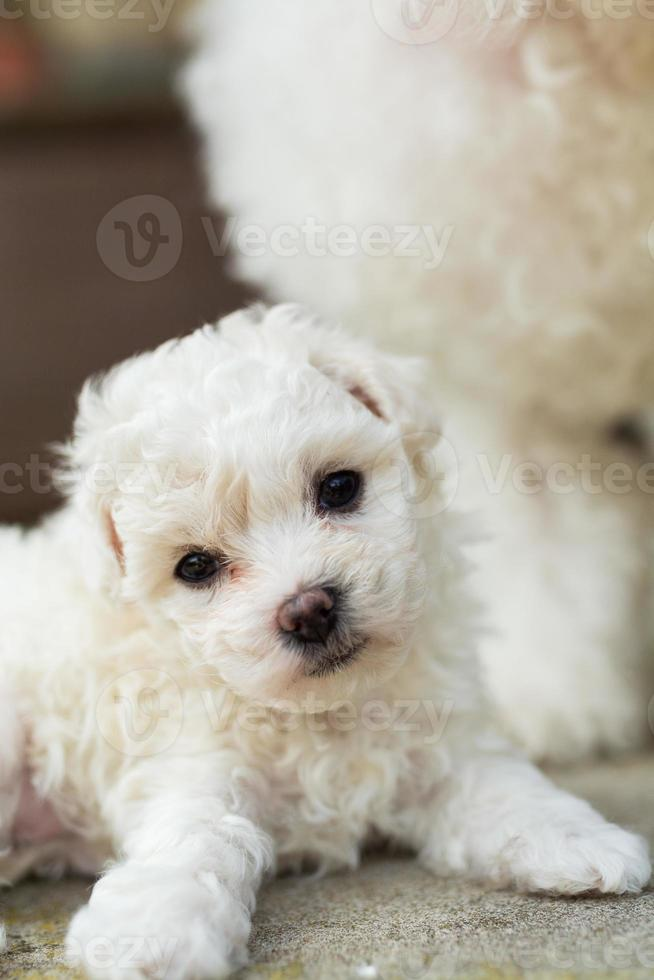 cabeça inclinada de filhote de cachorro foto