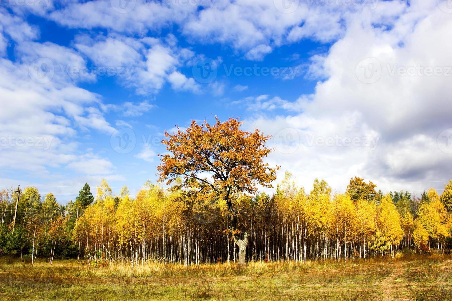 árvores de outono foto