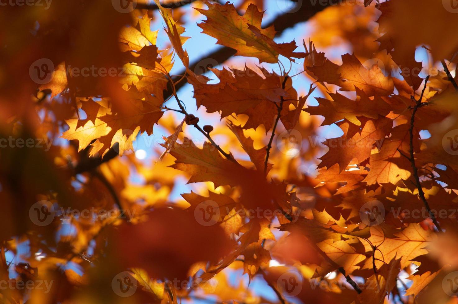 folhas de outono coloridas na árvore foto