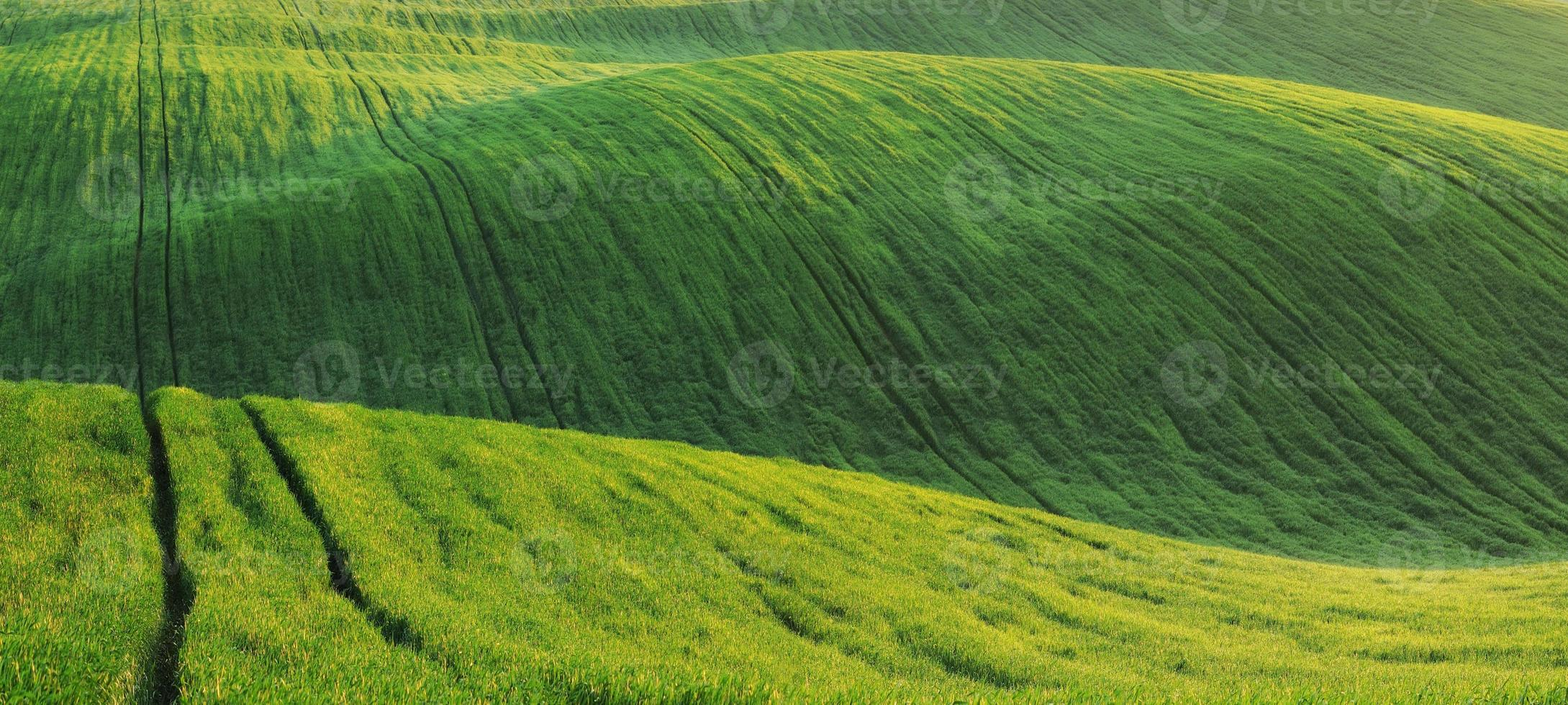 campo Verde foto