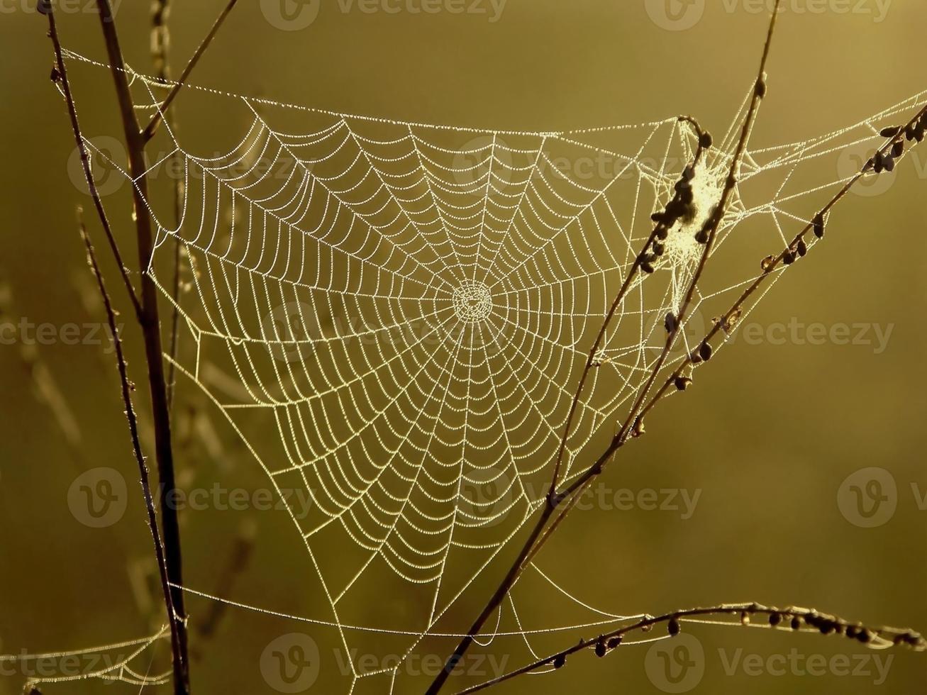 teia de aranha foto