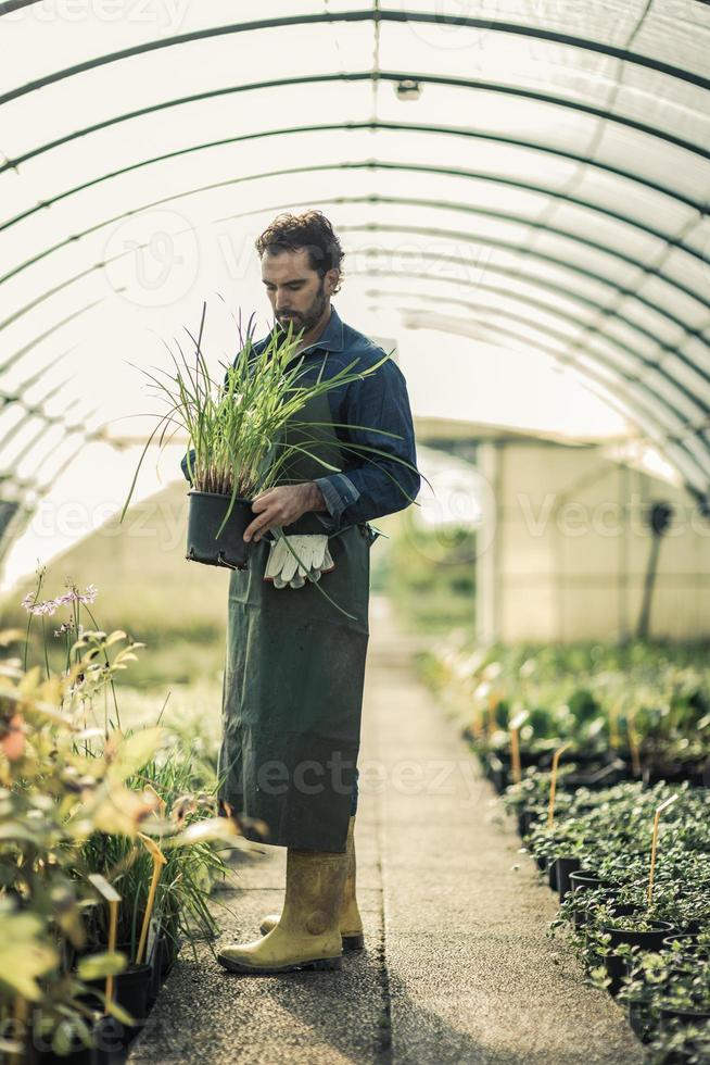 jardineiro em uma estufa foto
