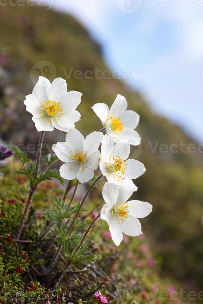 flores brancas foto