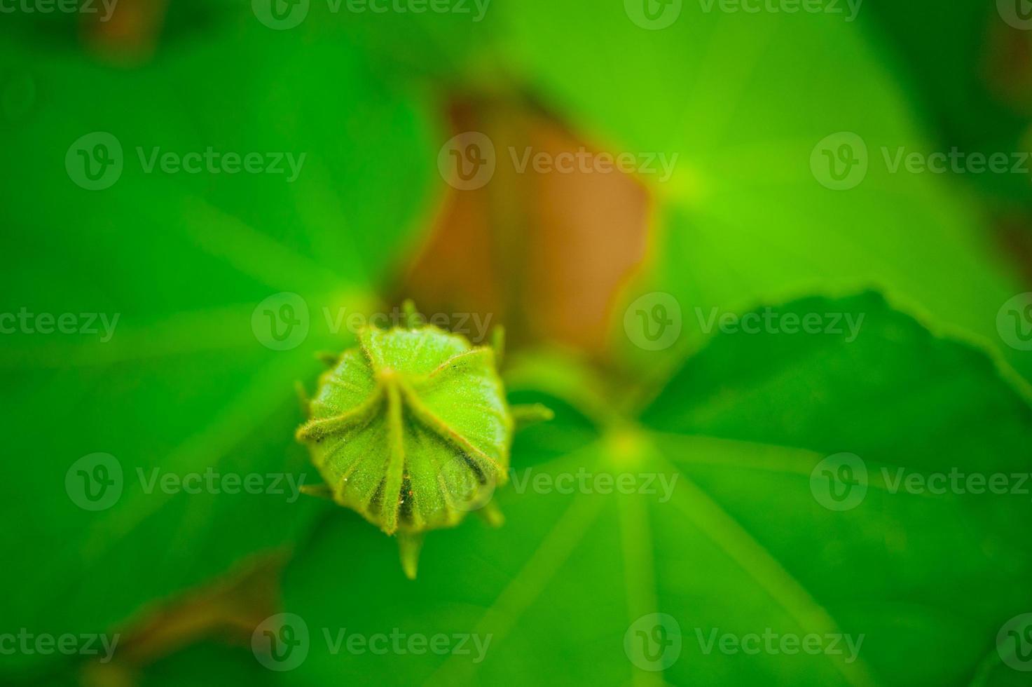 flor brotando foto