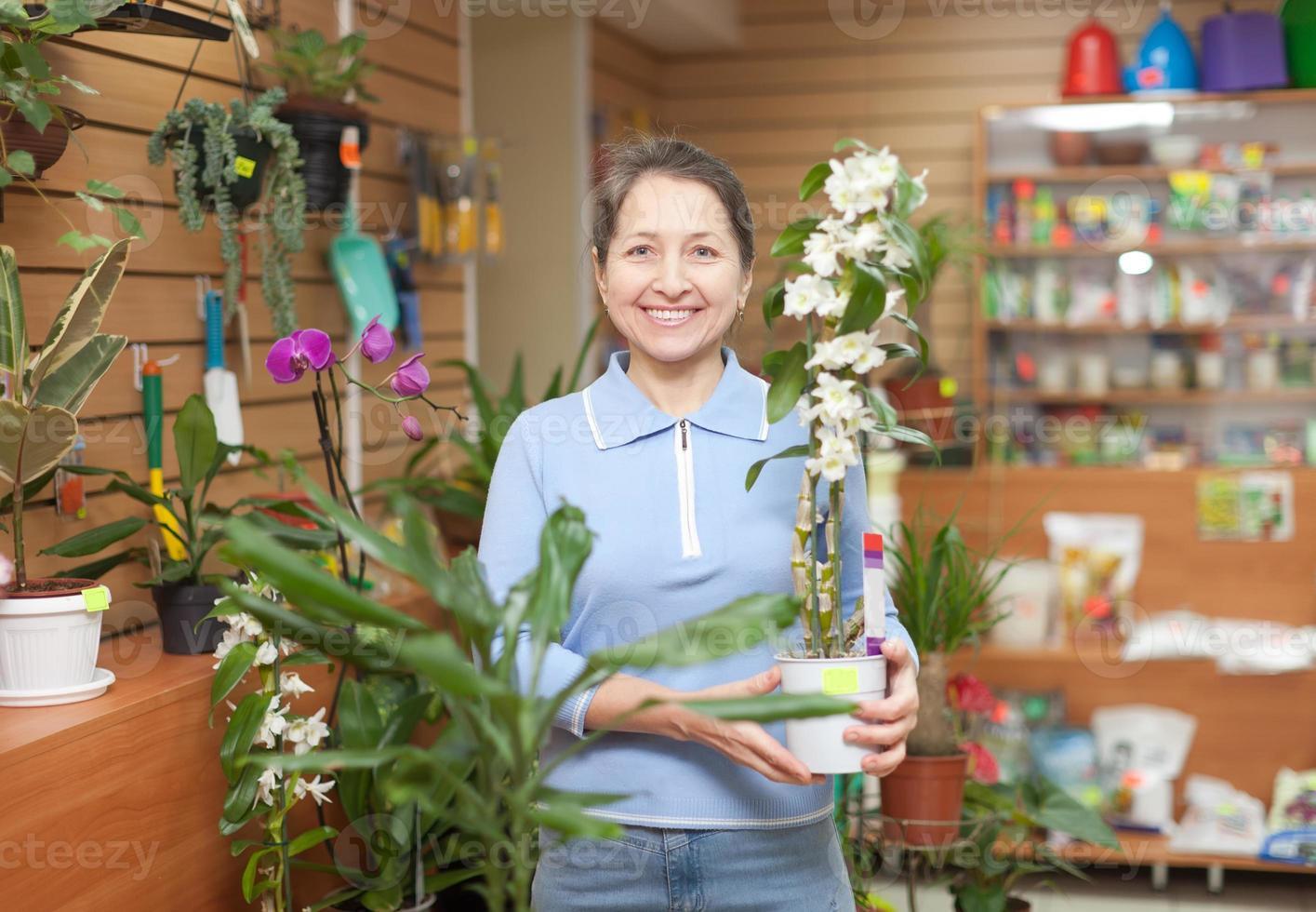 mulher escolhe orquídea dendrobium foto