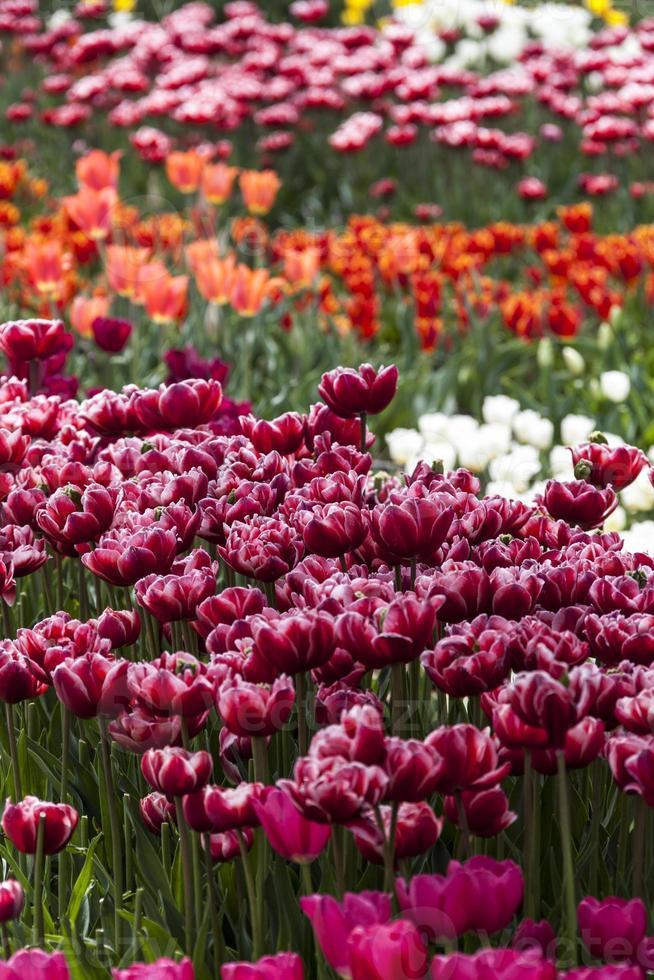 Jardim de flores foto