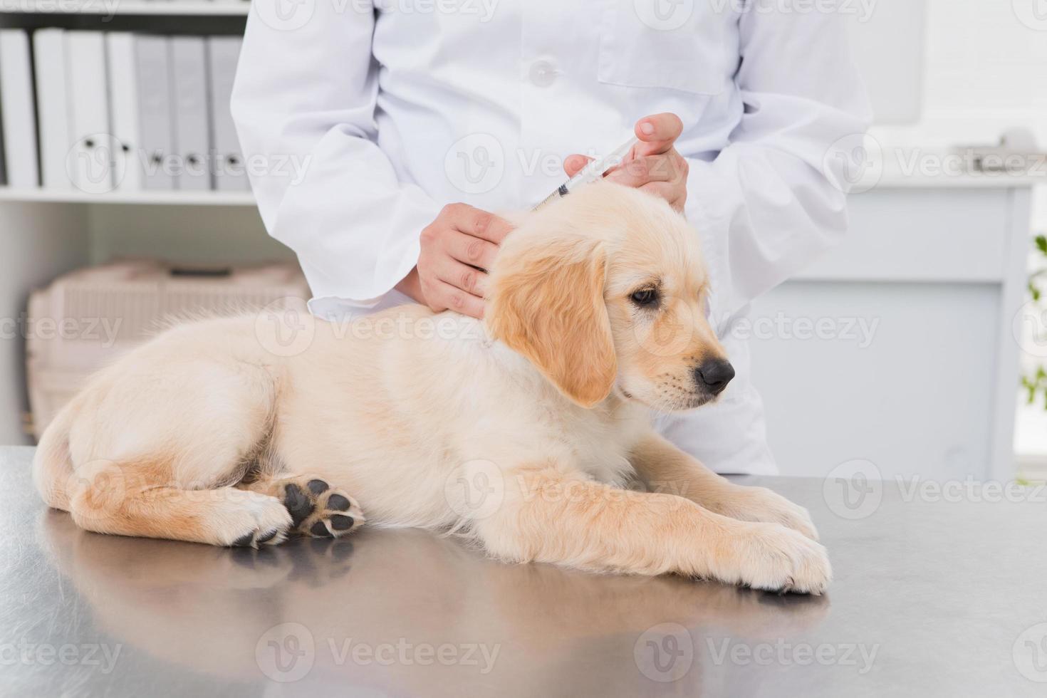 veterinário fazendo injeção em um cachorro fofo foto