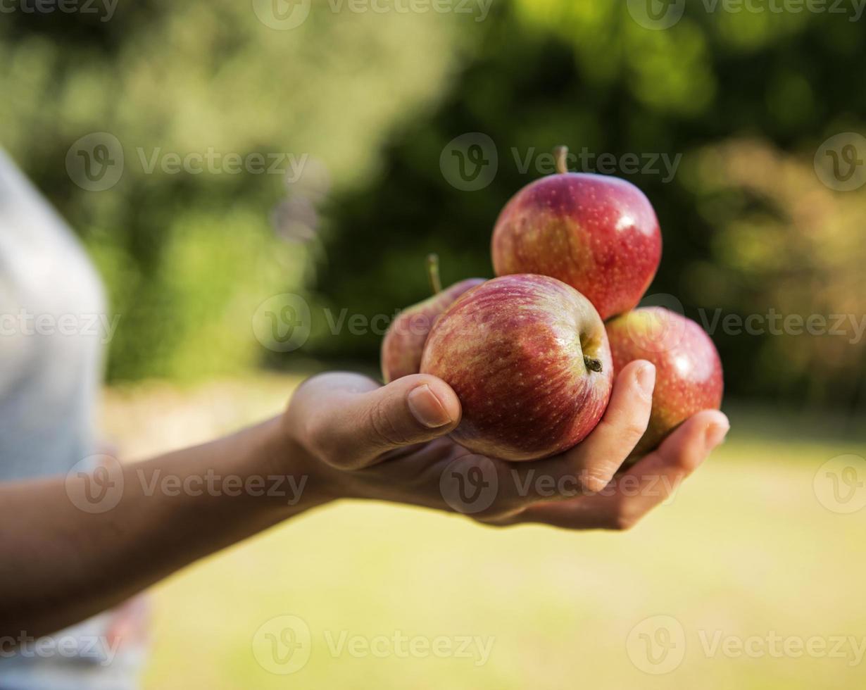 mão de uma mulher segurando um monte de maçãs foto