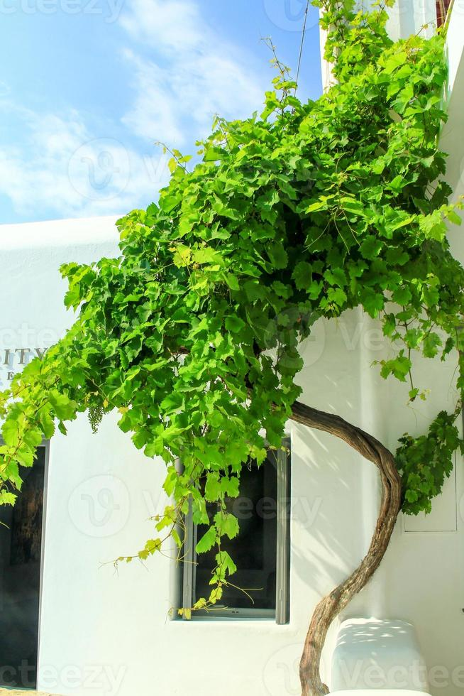 planta verde foto