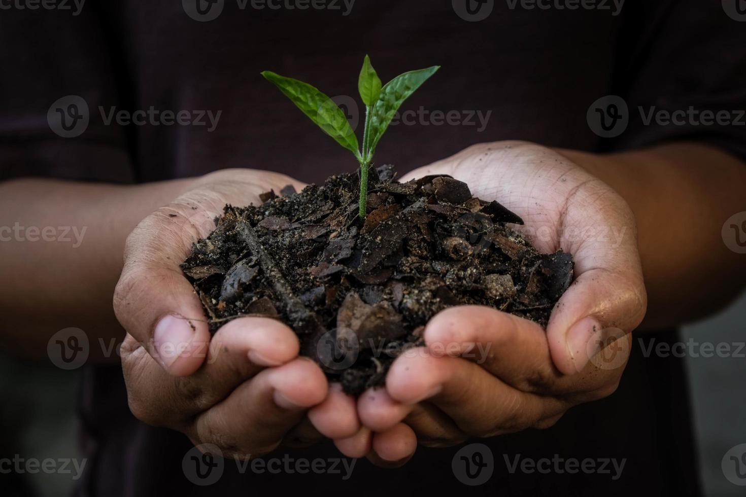 mãos segurando uma planta jovem. foto