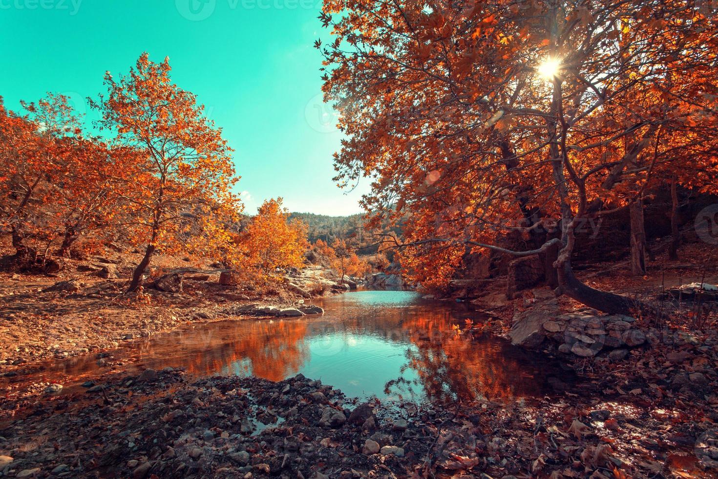dia de sol no outono perto de um rio pequeno foto