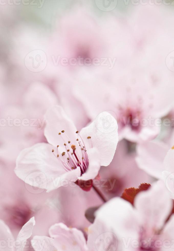 flor rosa em um fundo desfocado foto