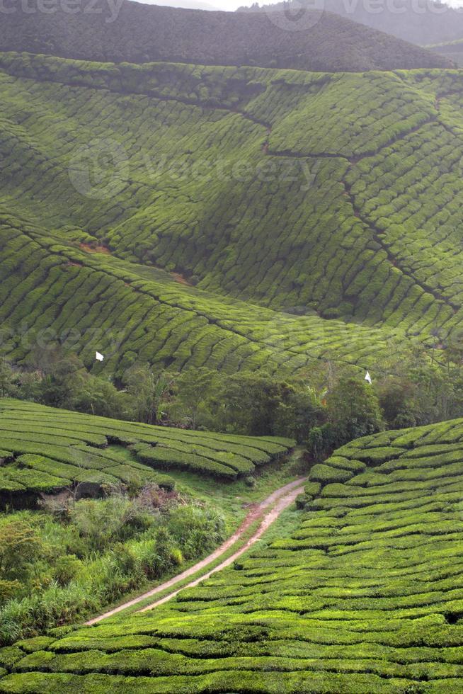 cameron highland, malásia foto