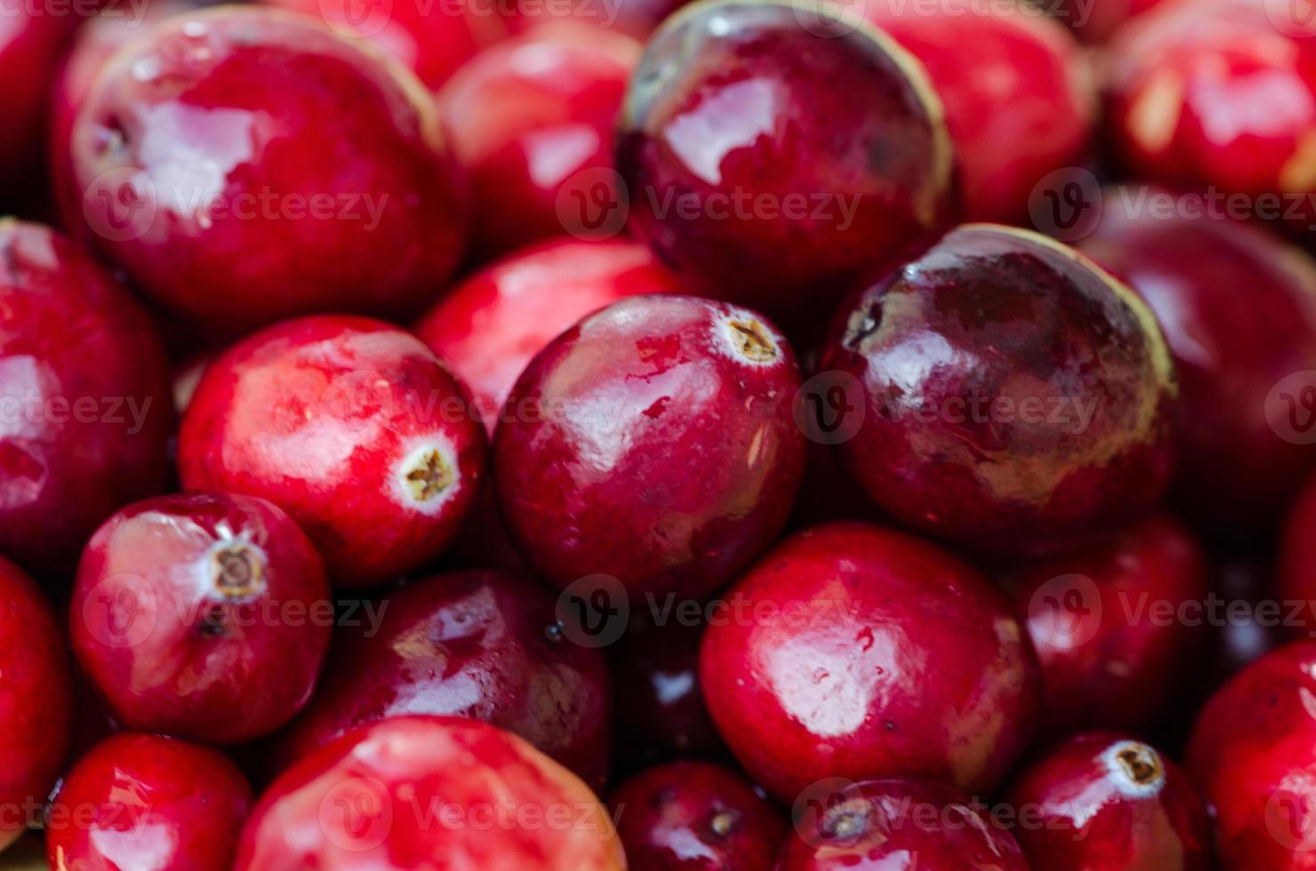 cranberries foto