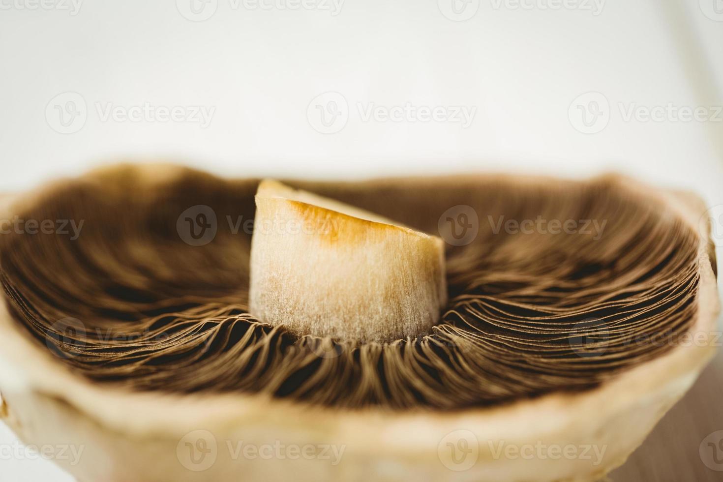 cogumelo fresco foto