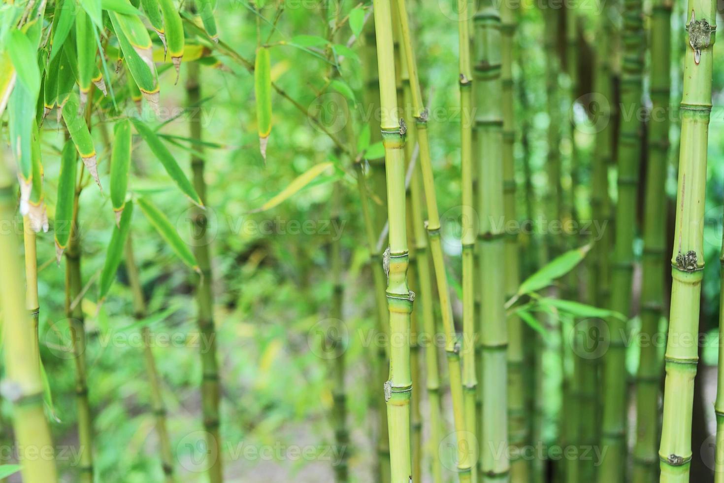 fundo asiático do jardim foto