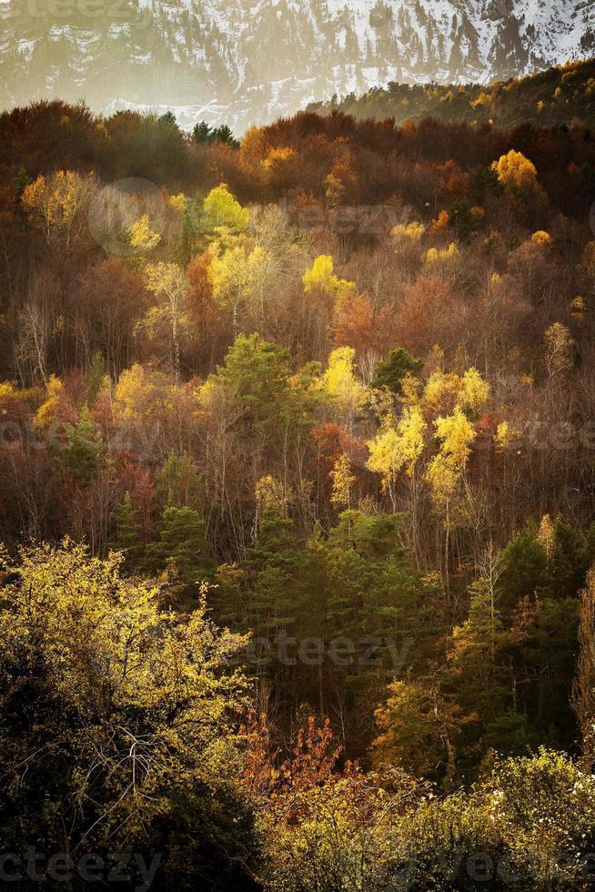 árvores da floresta colorida na temporada de outono foto