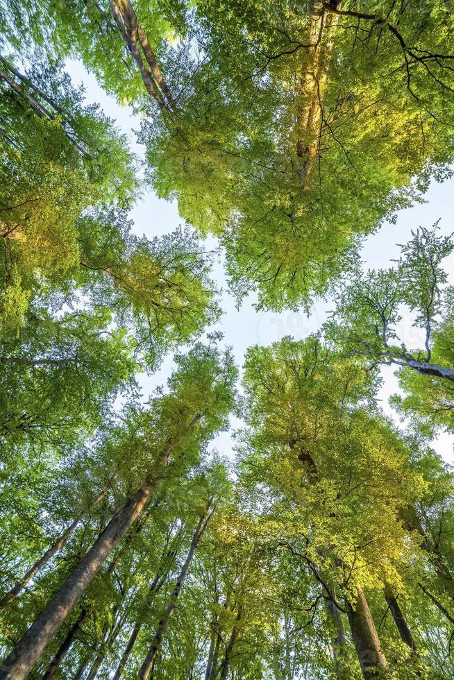 árvores da floresta. natureza verde madeira luz solar fundos foto