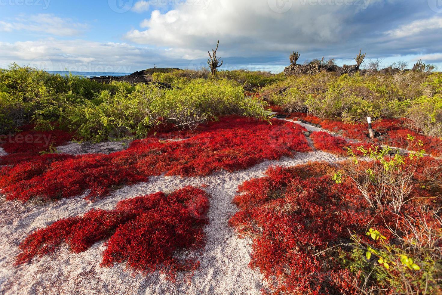 ilha floreana, ilhas galápagos, equador foto