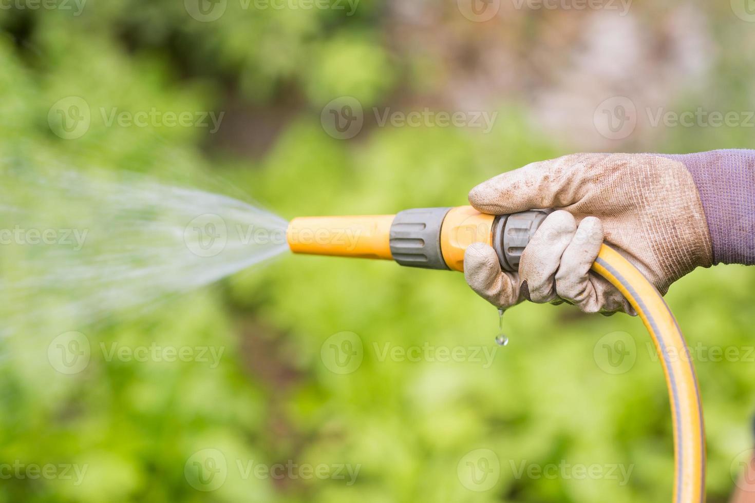 mulher molhando seu canteiro de flores foto