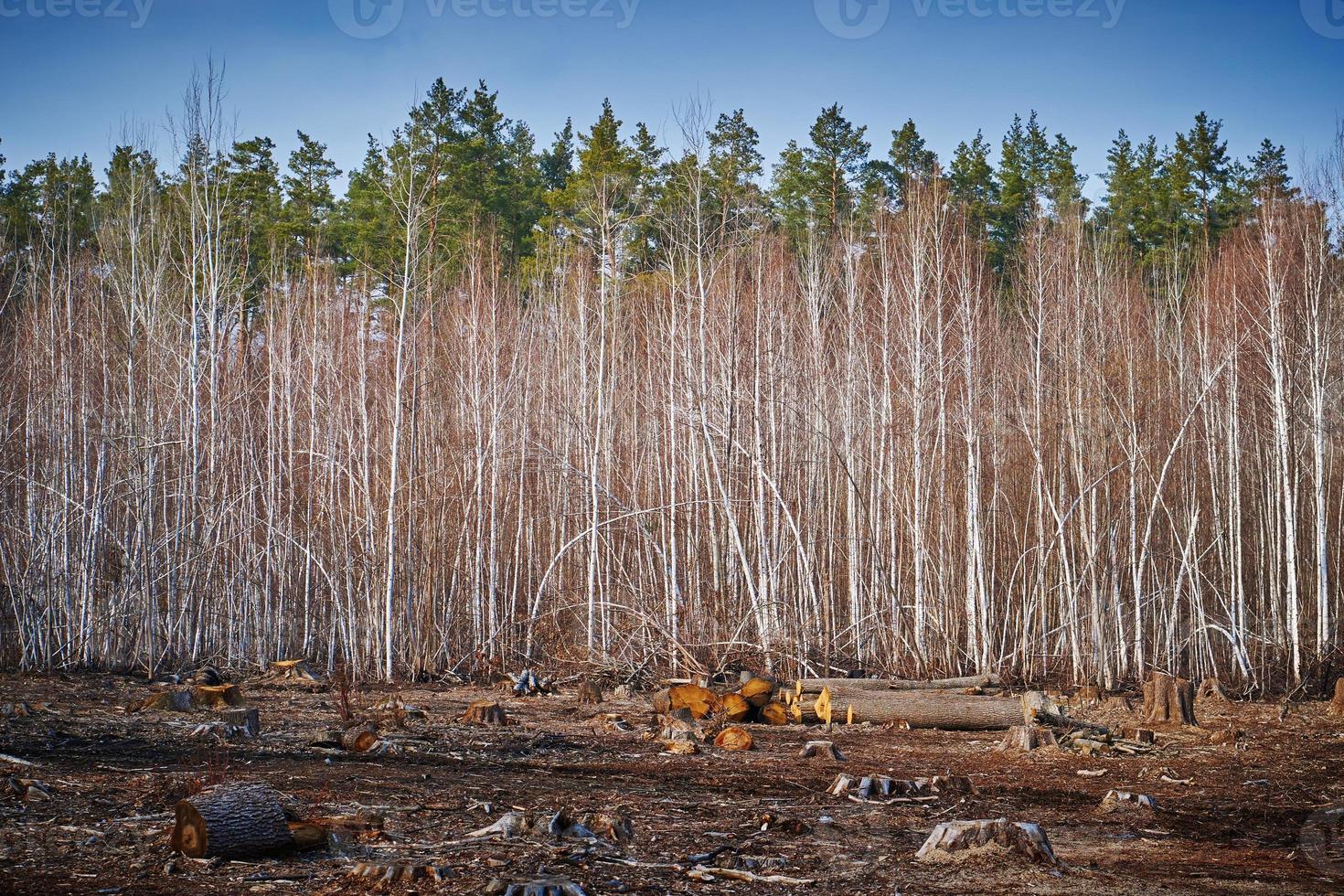 fundo de desmatamento foto