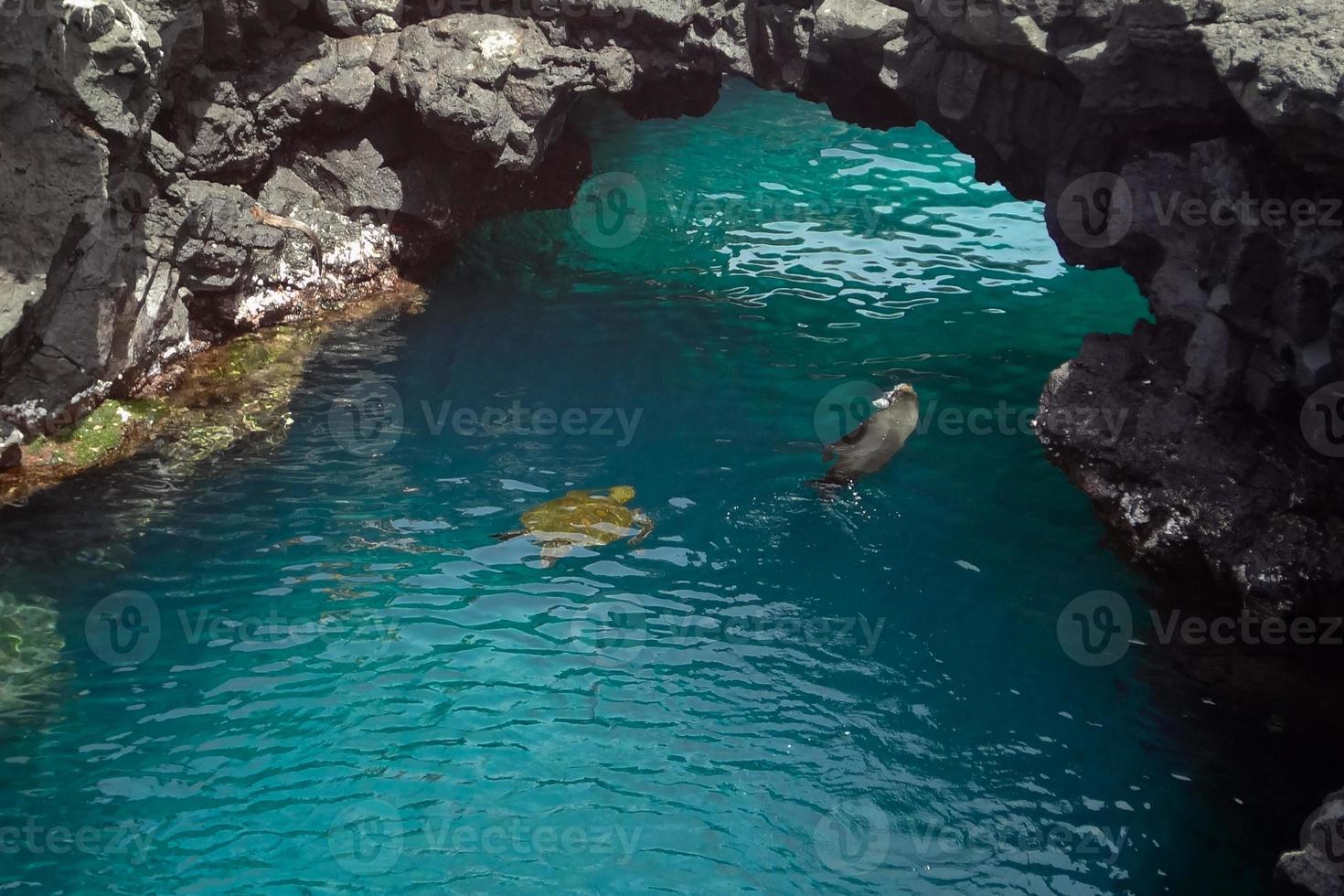 Galápagos animais foto
