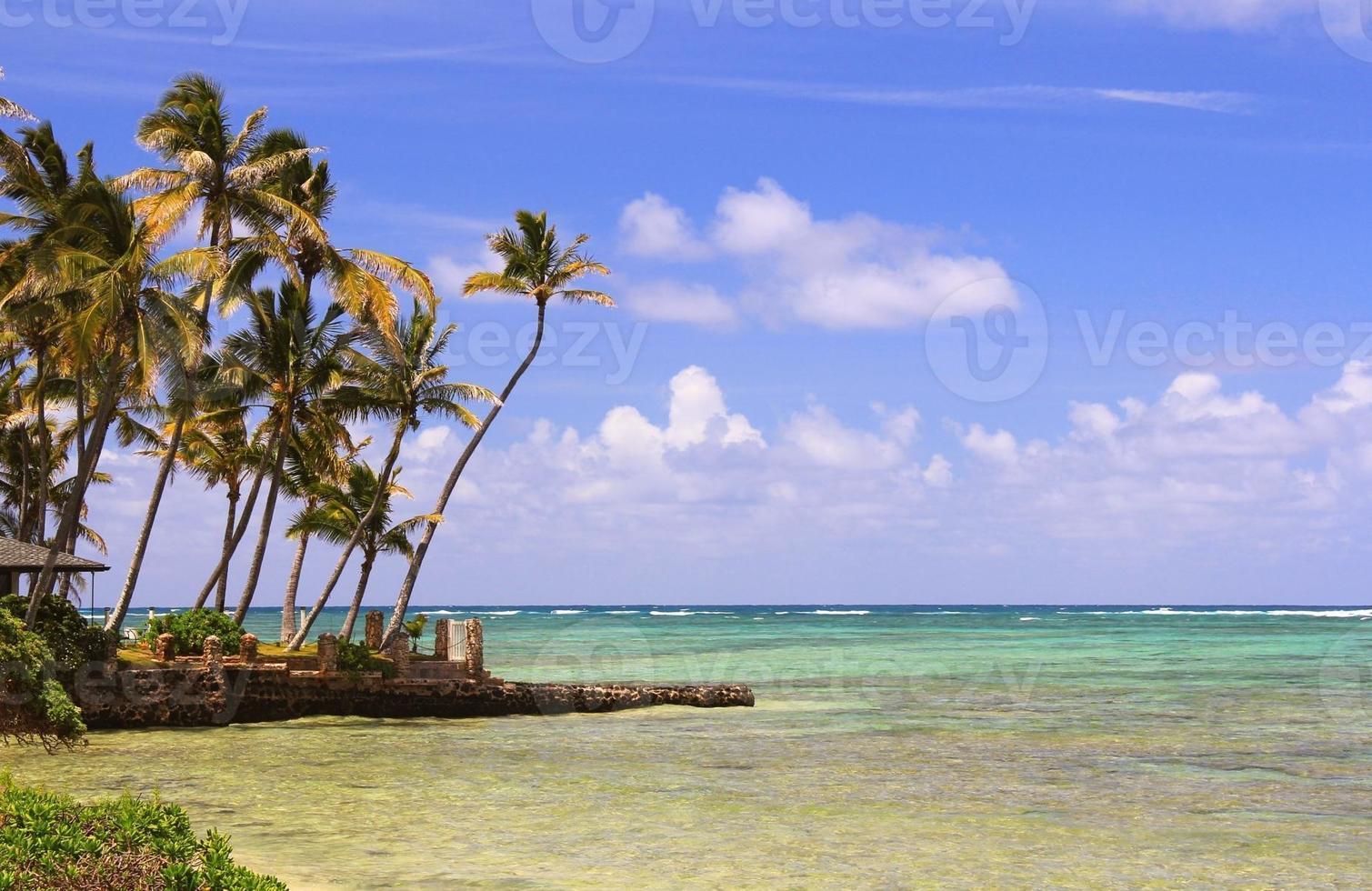 oahu havaí oceano pacífico palmeira praia cênico foto