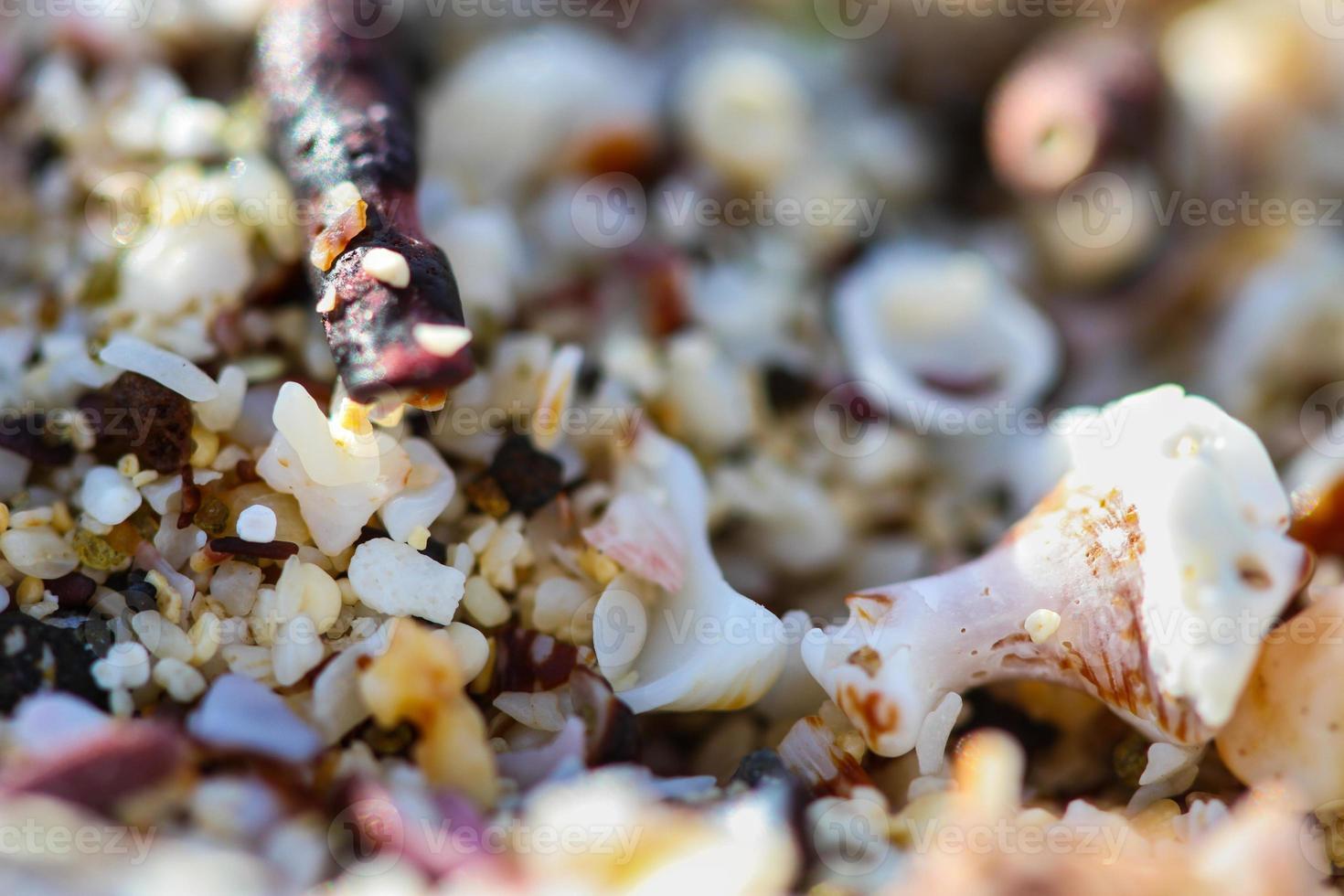 conchas do mar macro foto