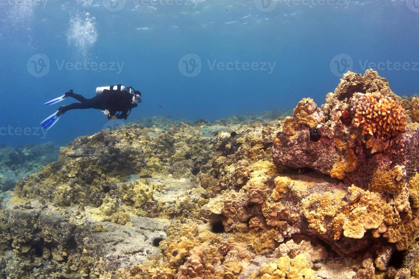 mergulhador em um recife havaiano foto