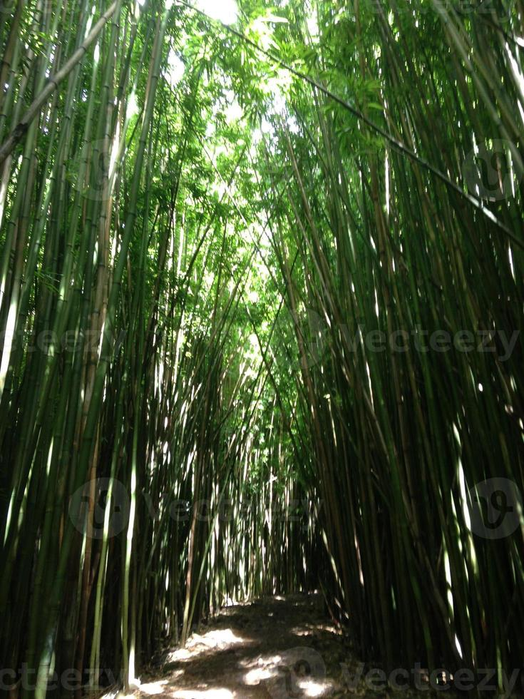 caminho de bambu foto
