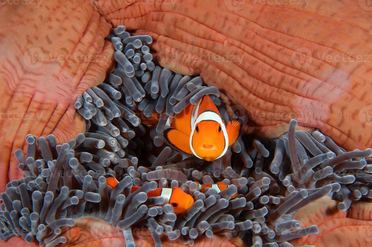 família de peixes foto