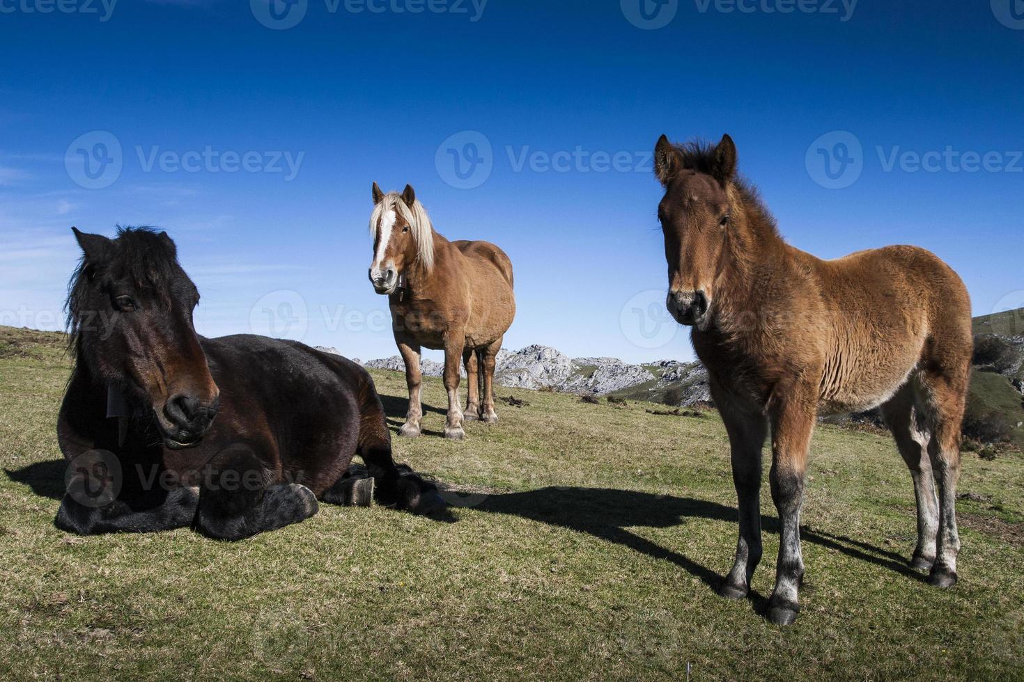 retrato de família de cavalos foto