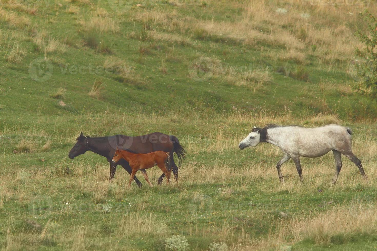família de cavalos perto da fazenda foto