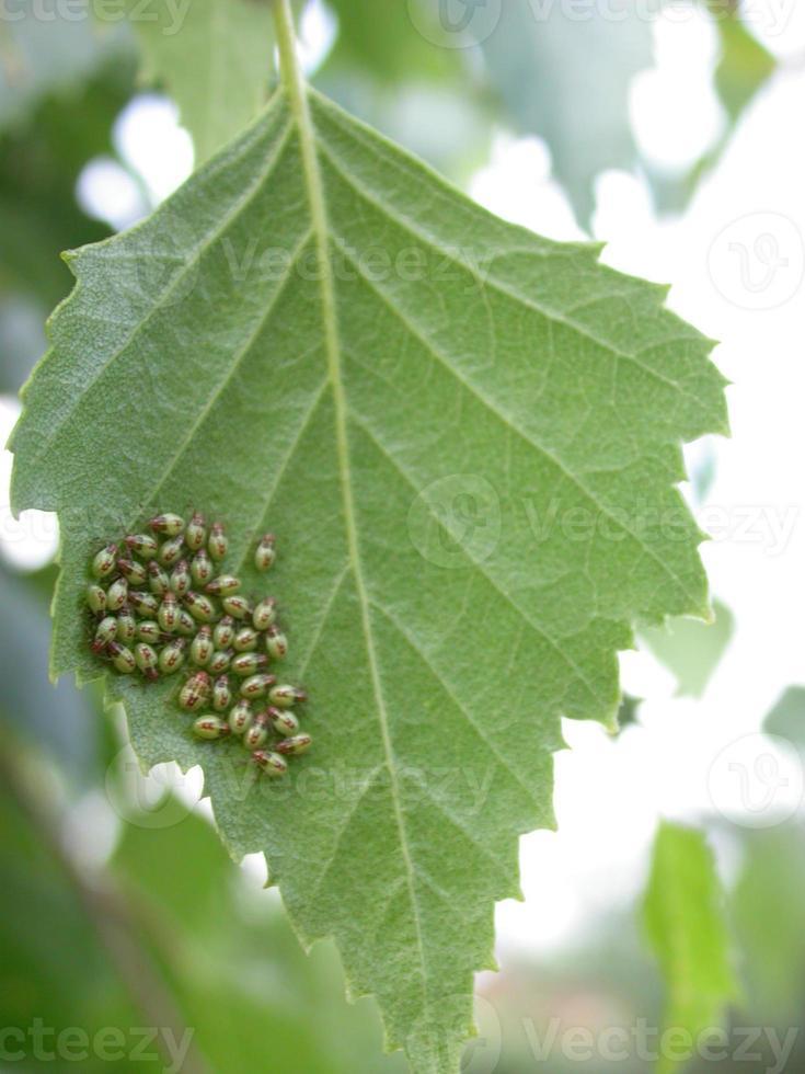 família de insetos 1 foto