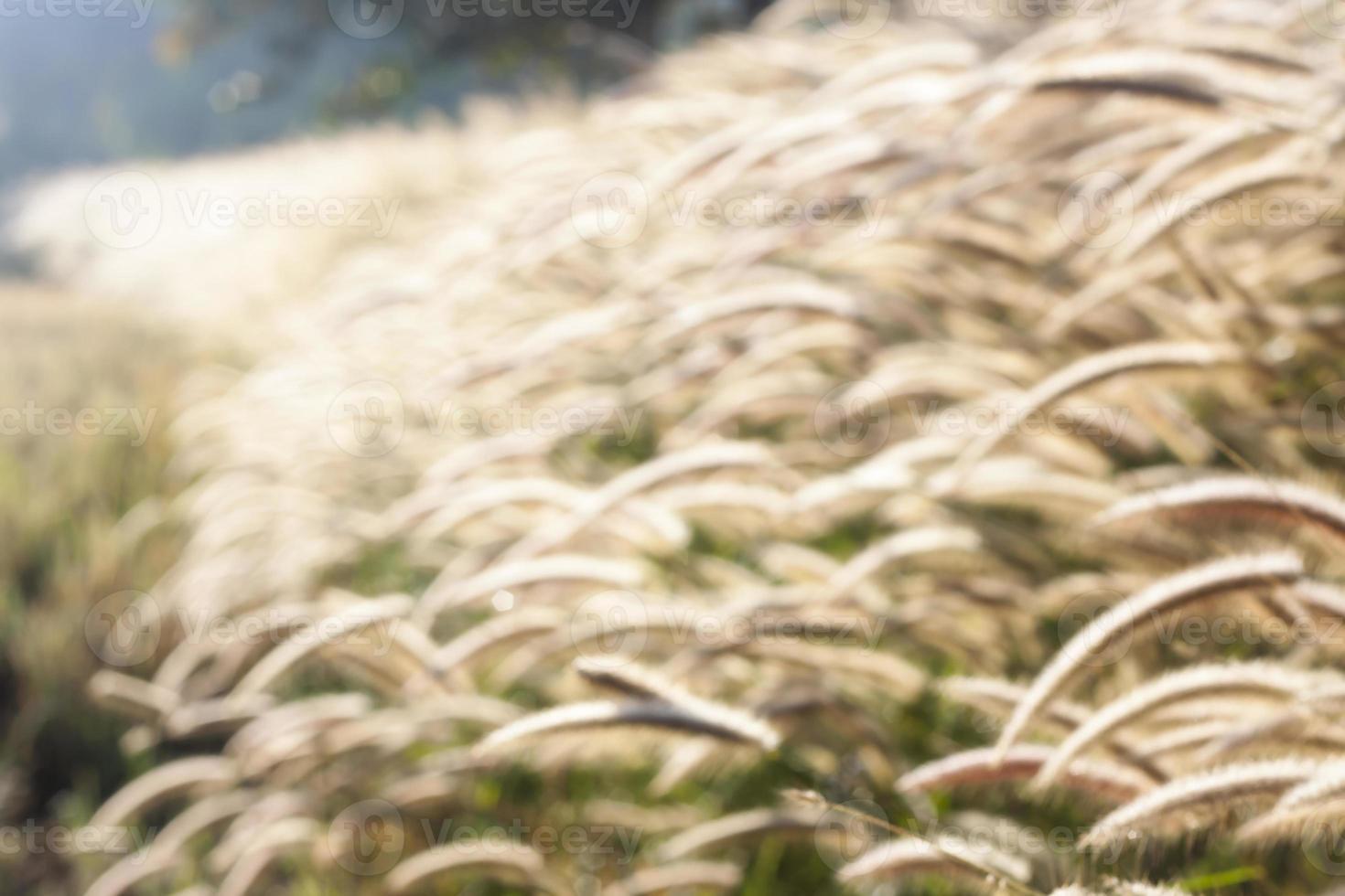 borrão de campo de grama foto