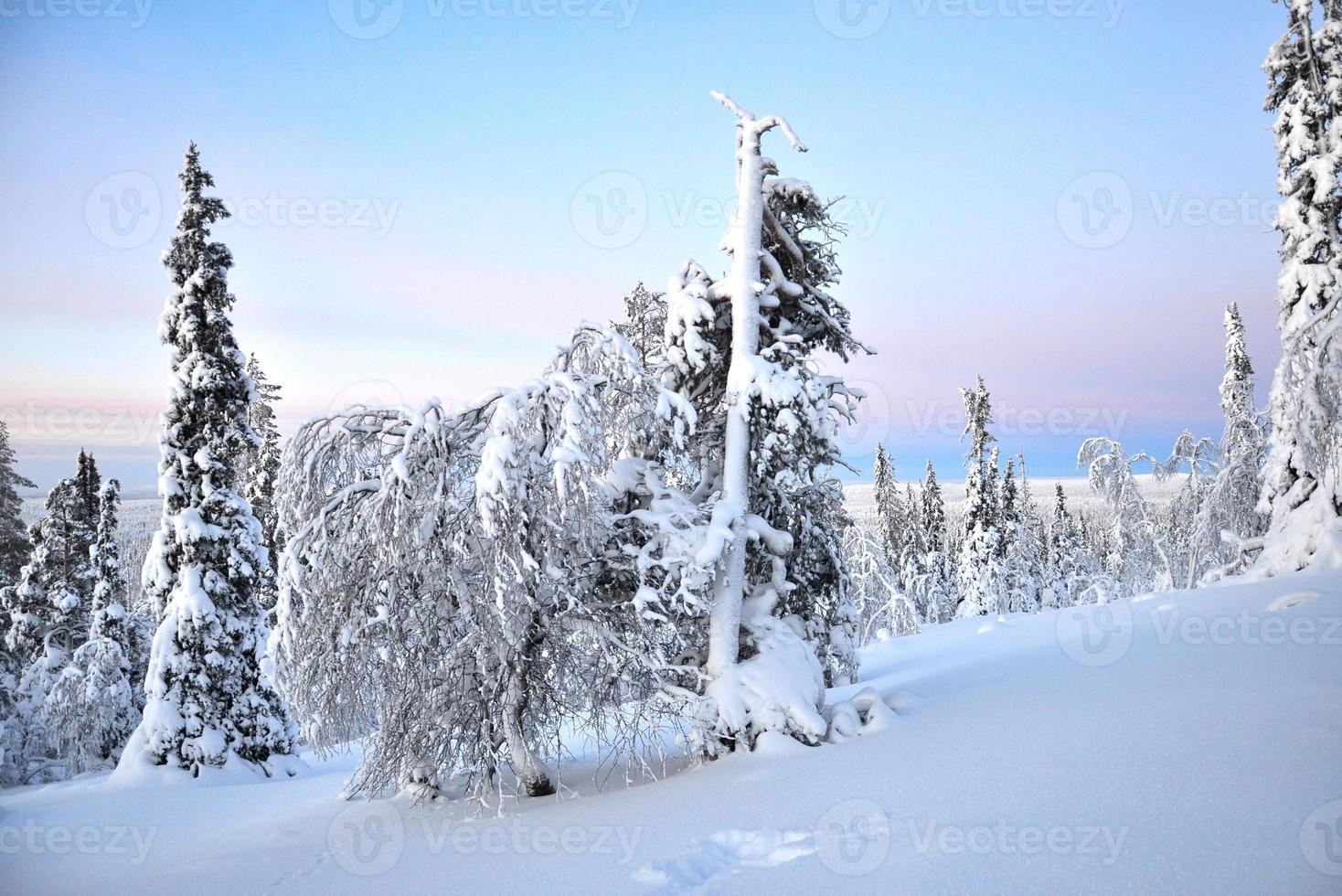 nascer do sol sobre uma floresta na Lapônia, Finlândia foto