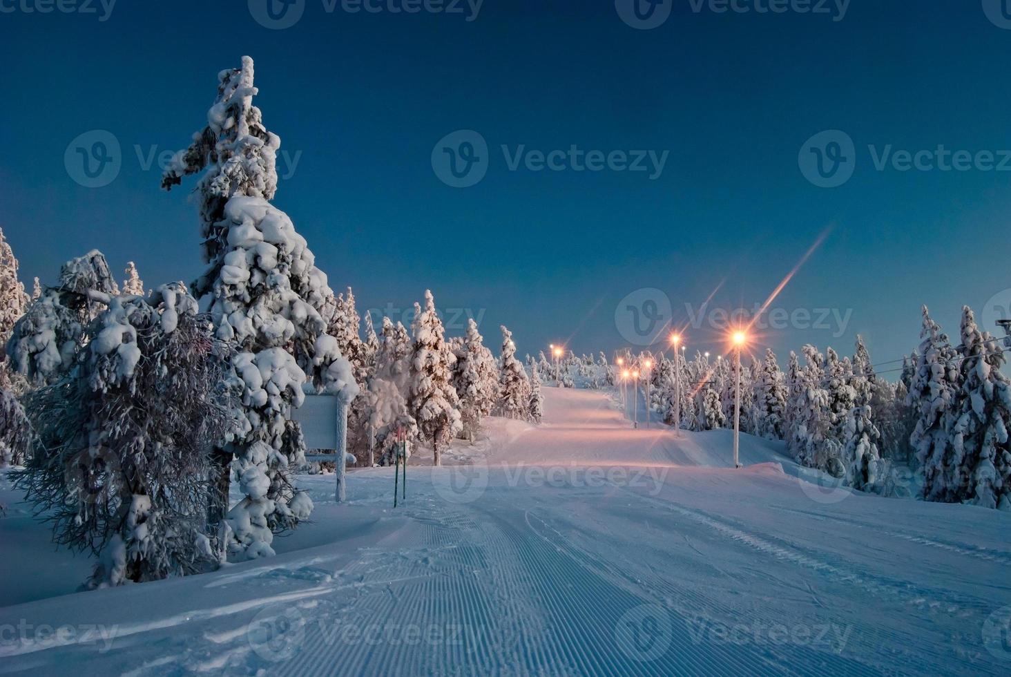 estrada iluminada na floresta foto