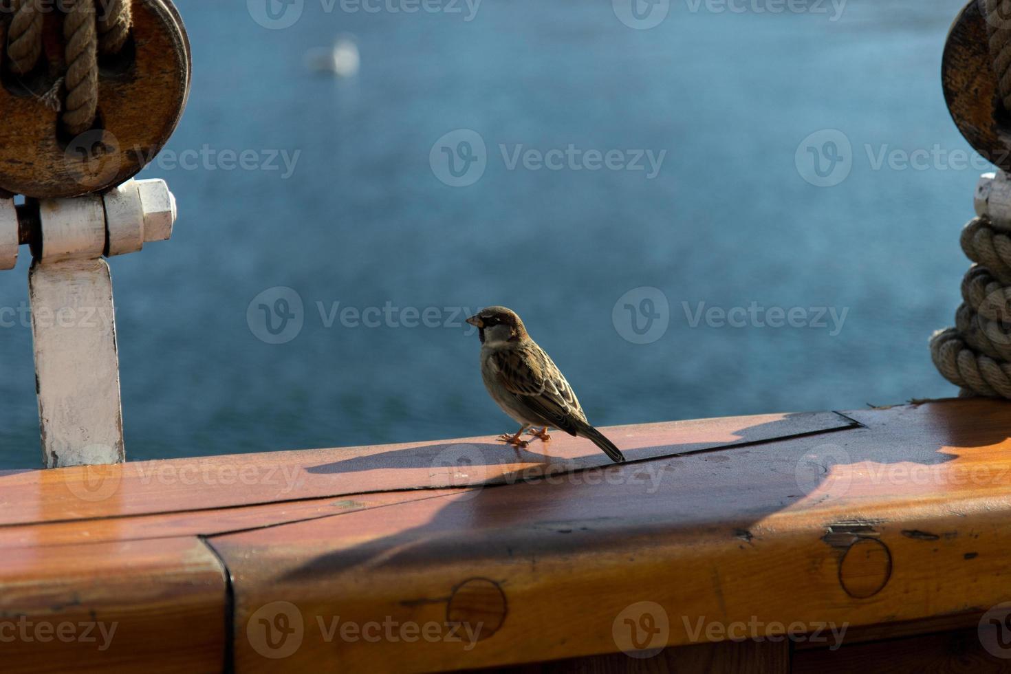 pássaro no barco foto