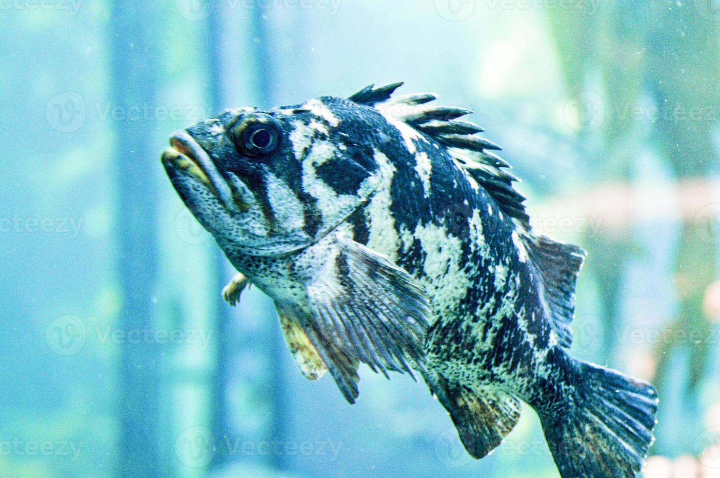 peixe de perto foto