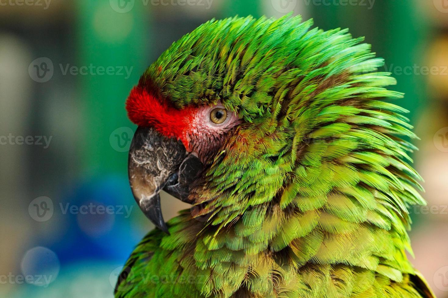 retrato de papagaio verde foto