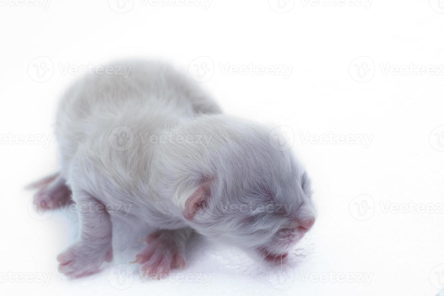 gatinho recém-nascido foto