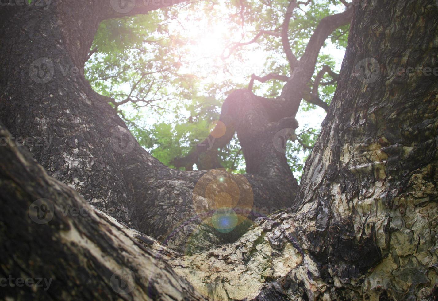 grande árvore no parque foto