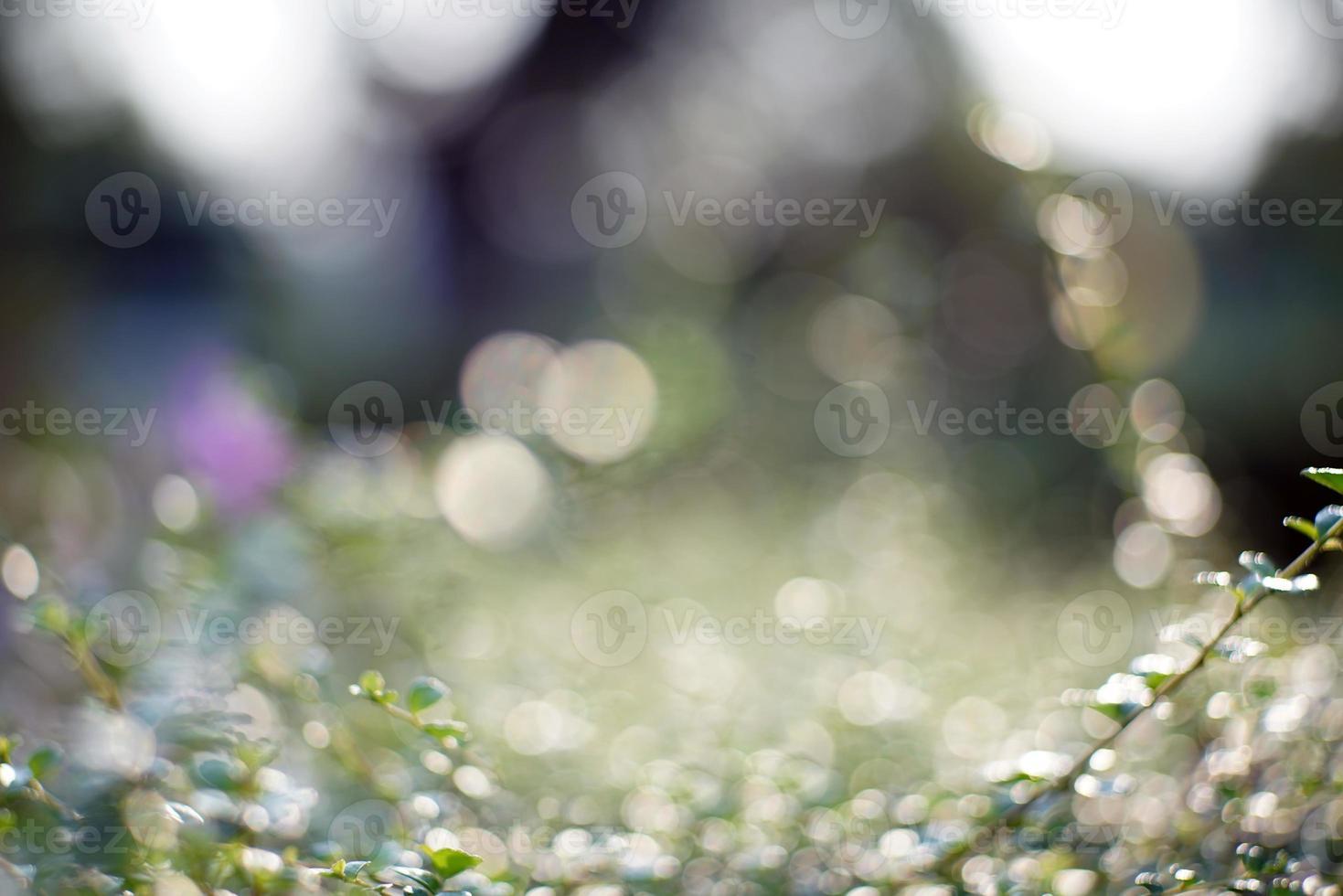 folha de bokeh com luz solar foto
