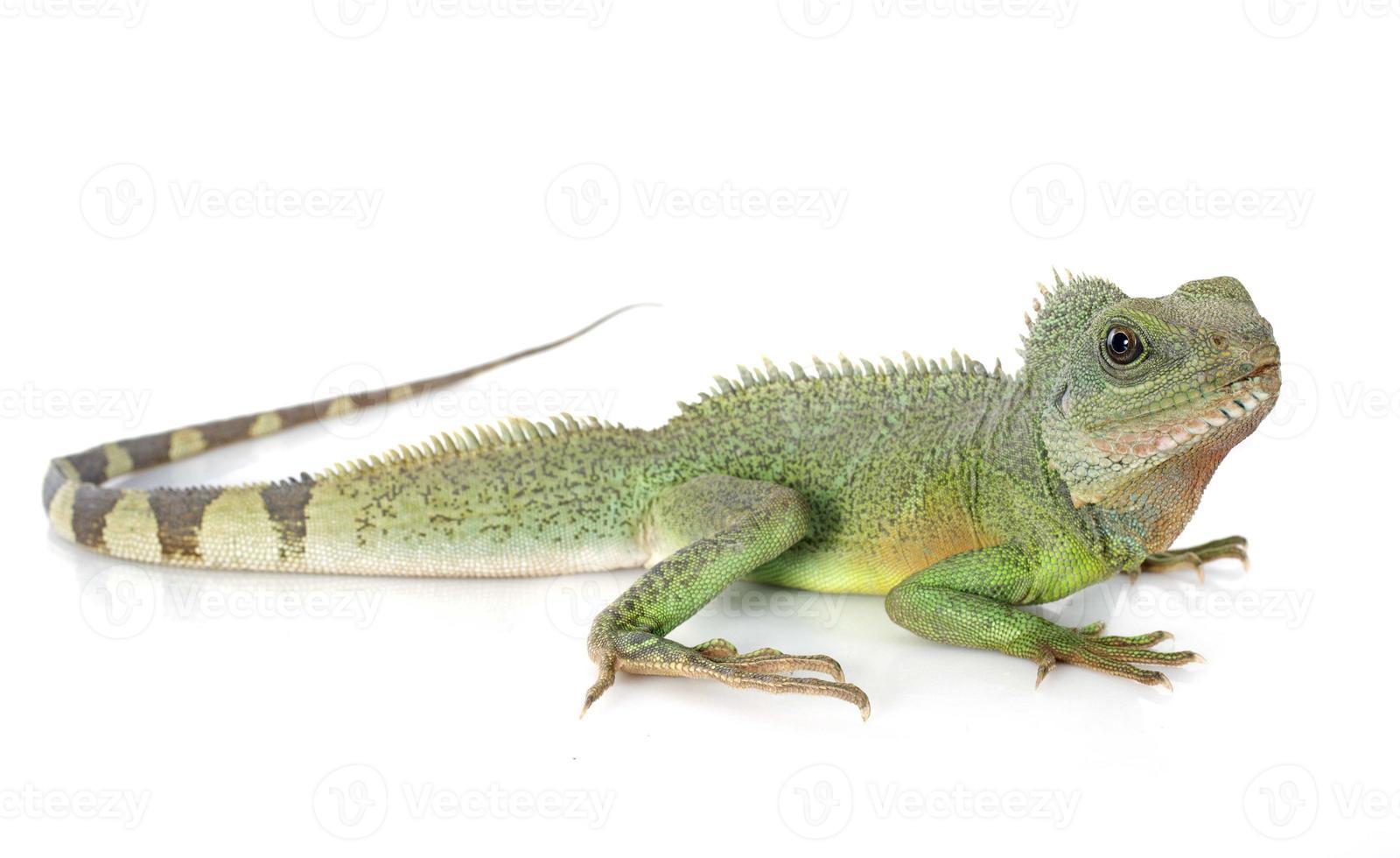 dragão de água chinês foto