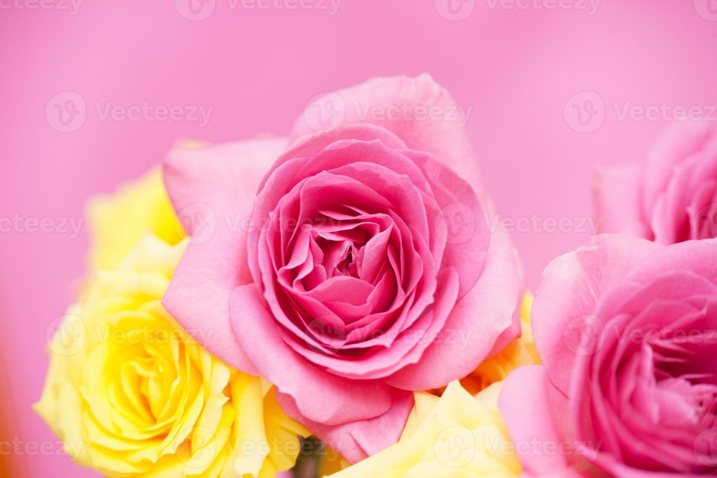 Rosas cor de rosa foto