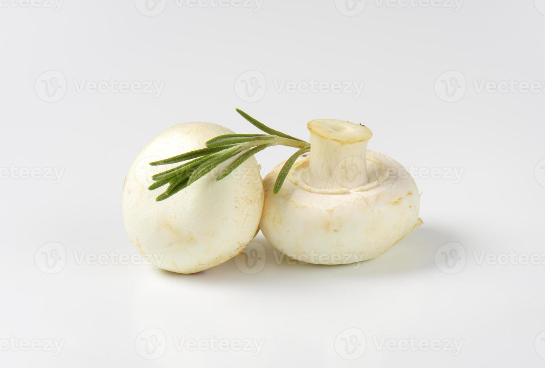 cogumelos agaricus bisporus brancos foto