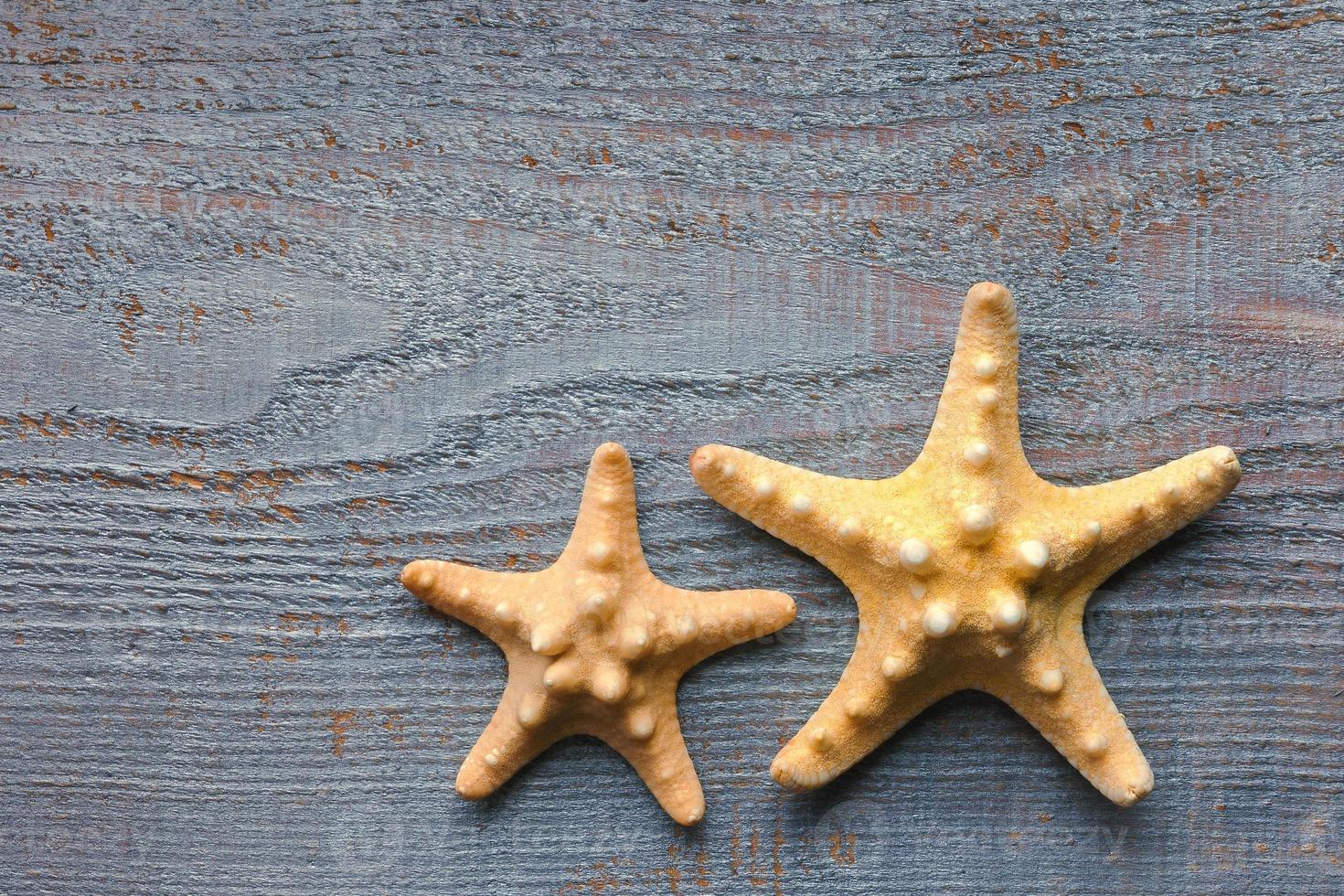 estrelas do mar foto
