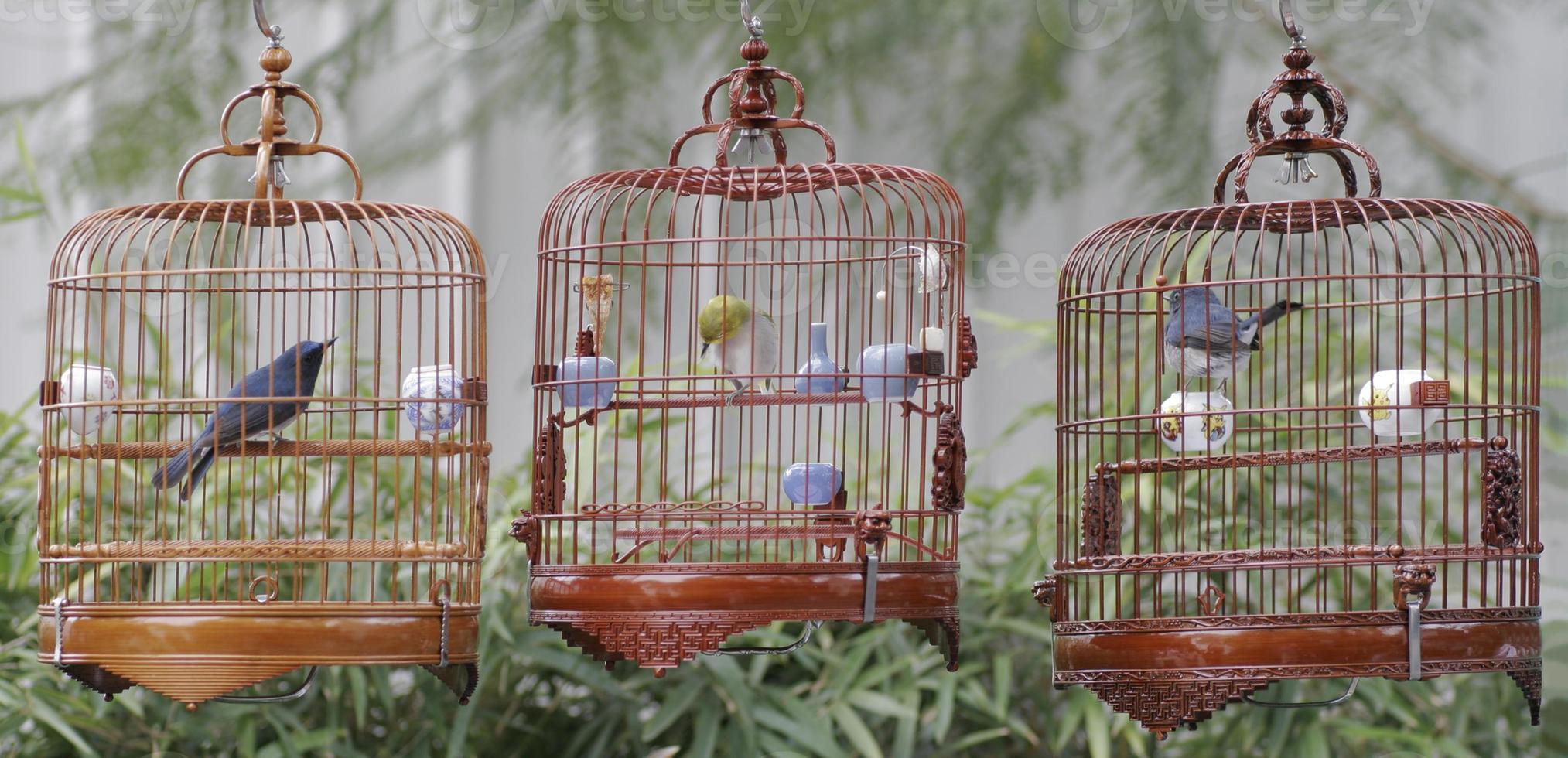 gaiolas de pássaros chineses foto