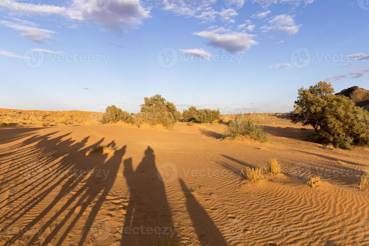 silhuetas de camelo foto